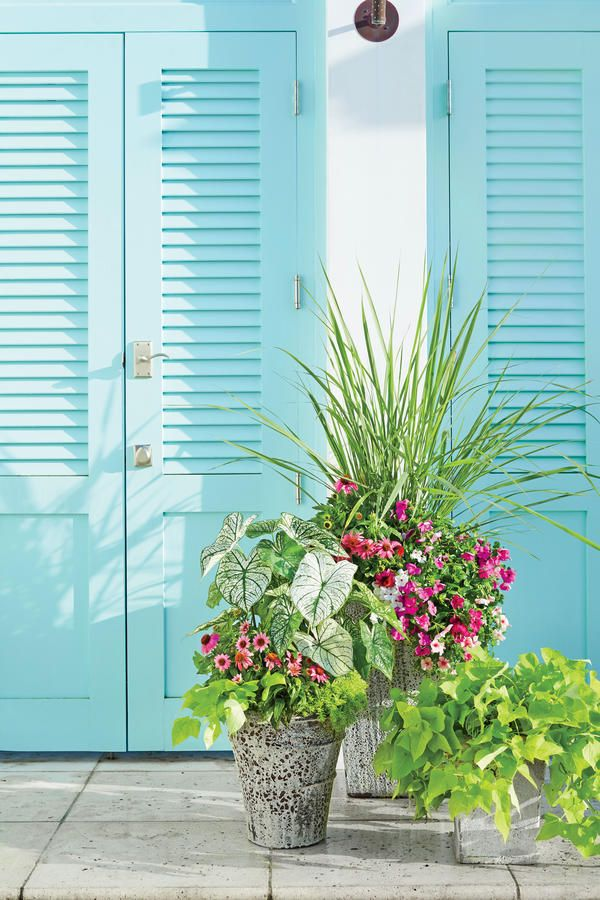 30 Colourful Spring Container Gardens