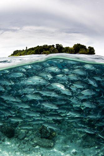 Over-under shot of jacks and Sipadan island www.missdinkles.com