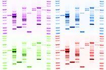 Willkommen zu ihrer individuellen Kunst: DNA print