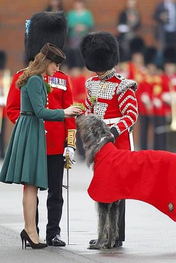17 Best Images About Irish Wolfhounds On Pinterest Old