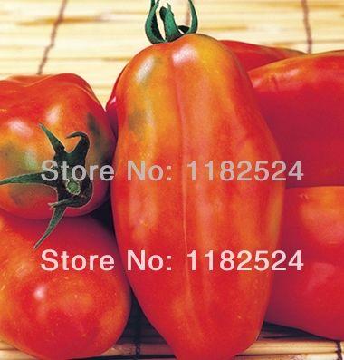 Новый! Раннего, Классический сан - дж. марцано форма - Tiren ( F1 ) семена помидоров фрукты овощи ( 50 семена )