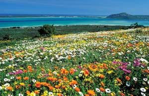 West Coast National Park - Western Cape, South Africa