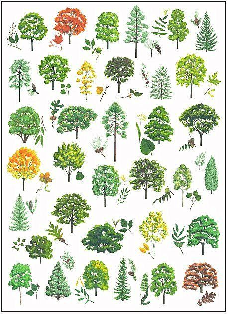 Tree Identification   Outside Duluth