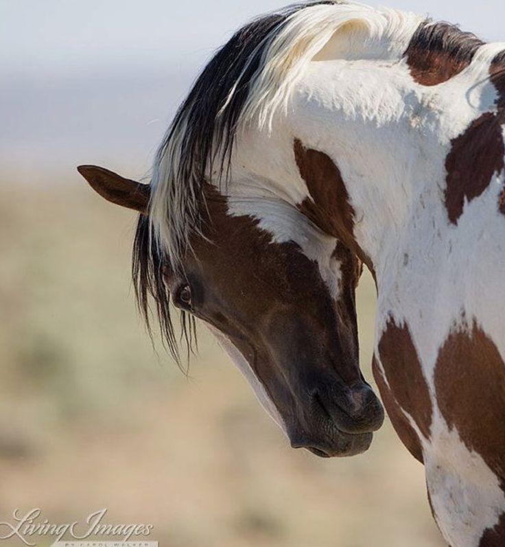 Mustang horse painting - photo#34