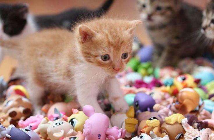 Littlest pet shop picture (c) lps_pinky
