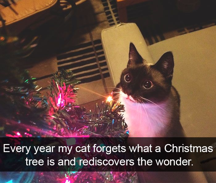10+ Hilarious Cat Snapchats That Are Im-paw-sible Not To Laugh At | Bored Panda