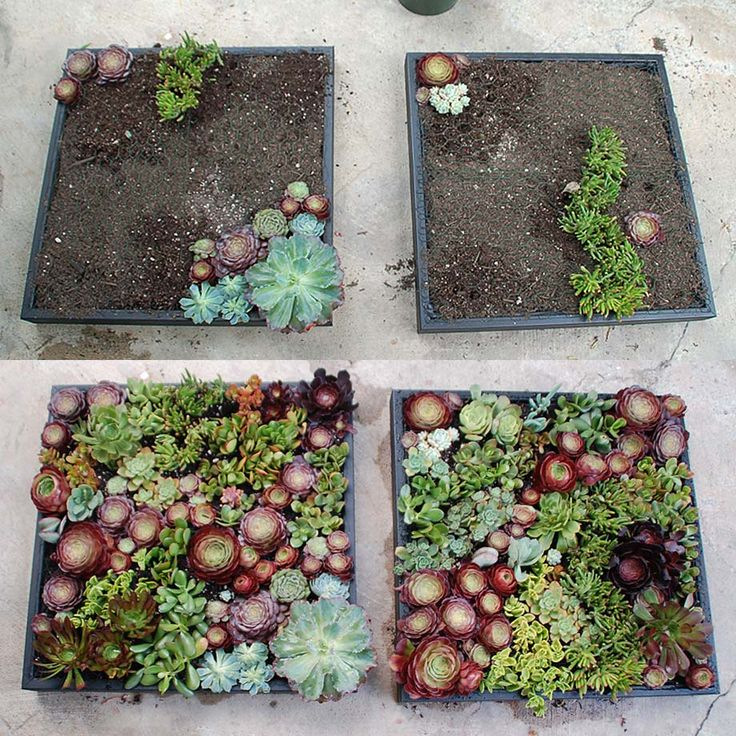 Google Image Result for http://ideasrealized.files.wordpress.com/2011/05/succulent_boxes_5.jpg