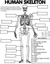 Human Skeleton coloring page - Nov/Dec Human Body Unit.