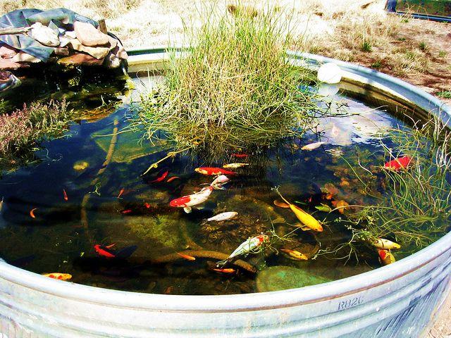 Livestock Trough Water Garden Photo Koi Pinterest