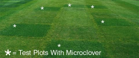 Pro Time Lawn Seed — PT 799 Microclover®