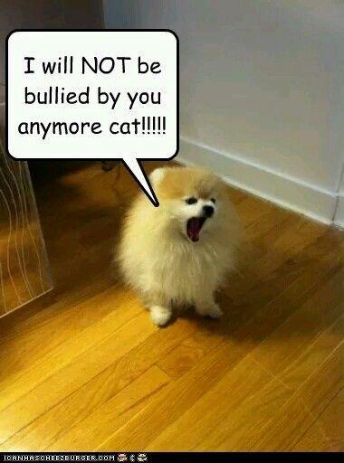 10 Best Pomeranian World Images On Pinterest