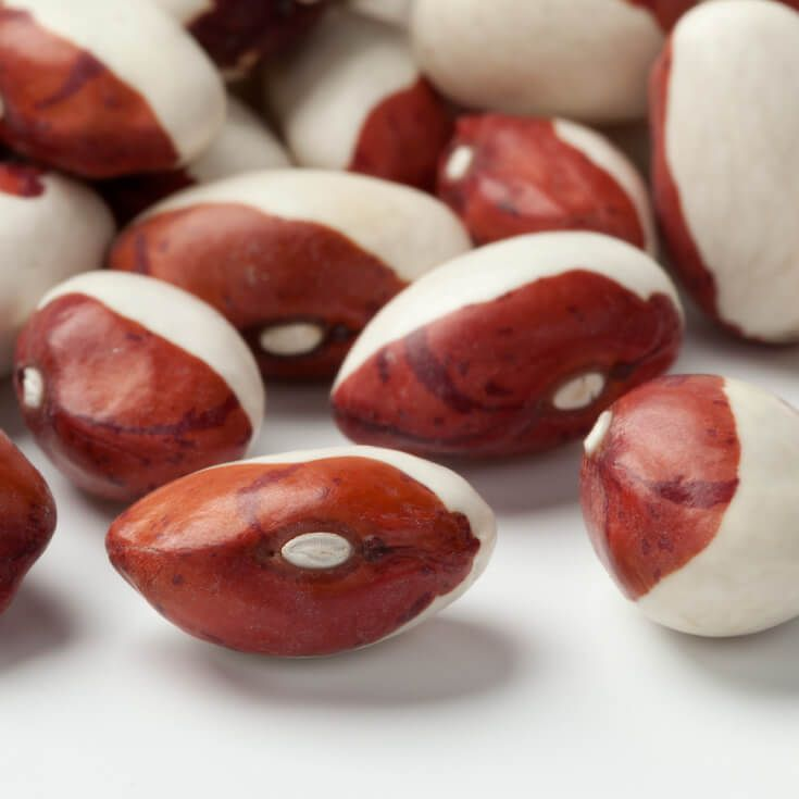 Can Anasazi Beans Fight Diabetes AND Cancer?