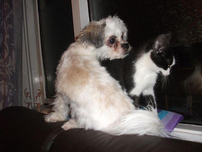 hoezo als kat en hond ?