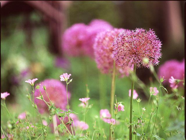 One film three seasons: Spring | Flickr - Photo Sharing!