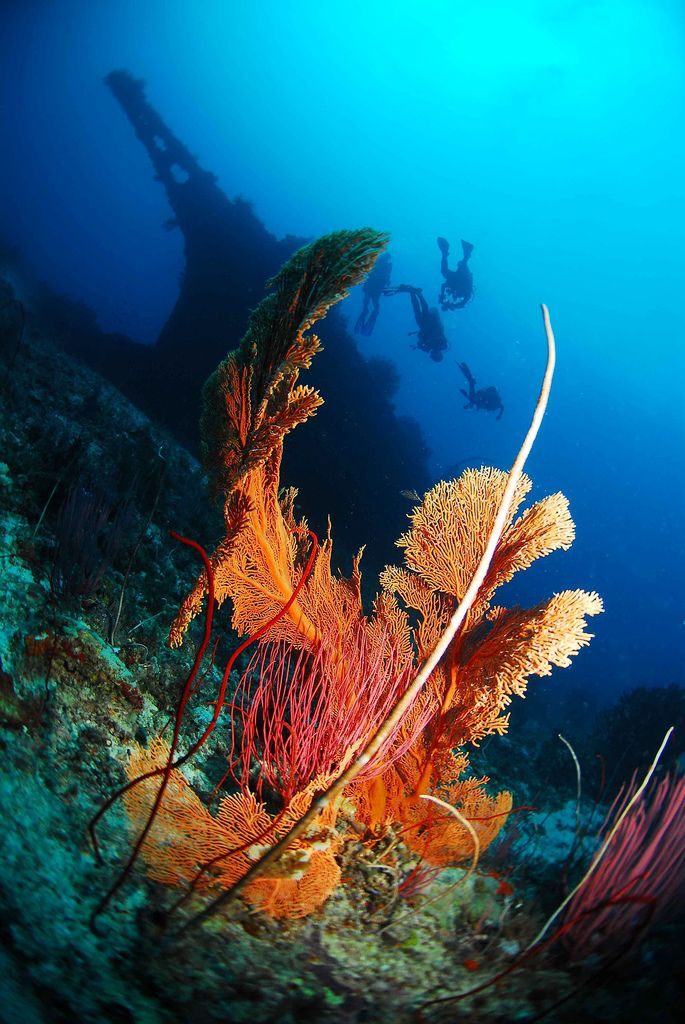 26 best dive trips images on pinterest diving scuba diving and snorkeling - Best dive trips ...
