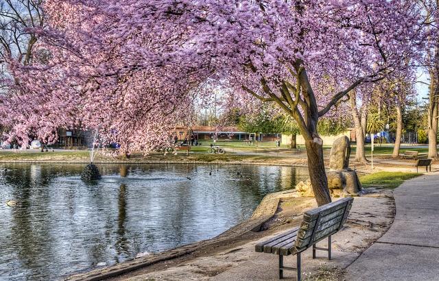 McKinley Park, Sacramento CA