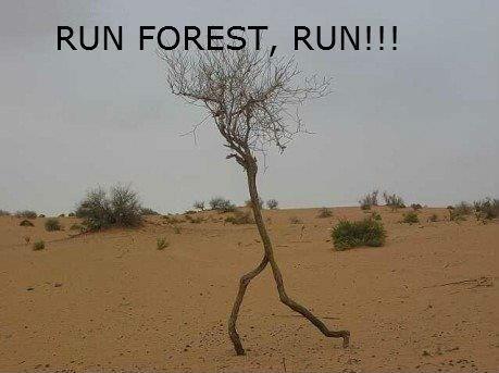 ha ha run forest -  Check out the blog: http://trendingfn.blogspot.com