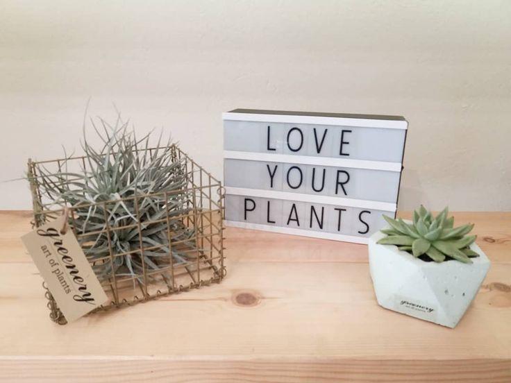 Love your plants! Shop online: www.greenery.gr  #greenery #plants #airplants #succulents #concrete #gabion #greece