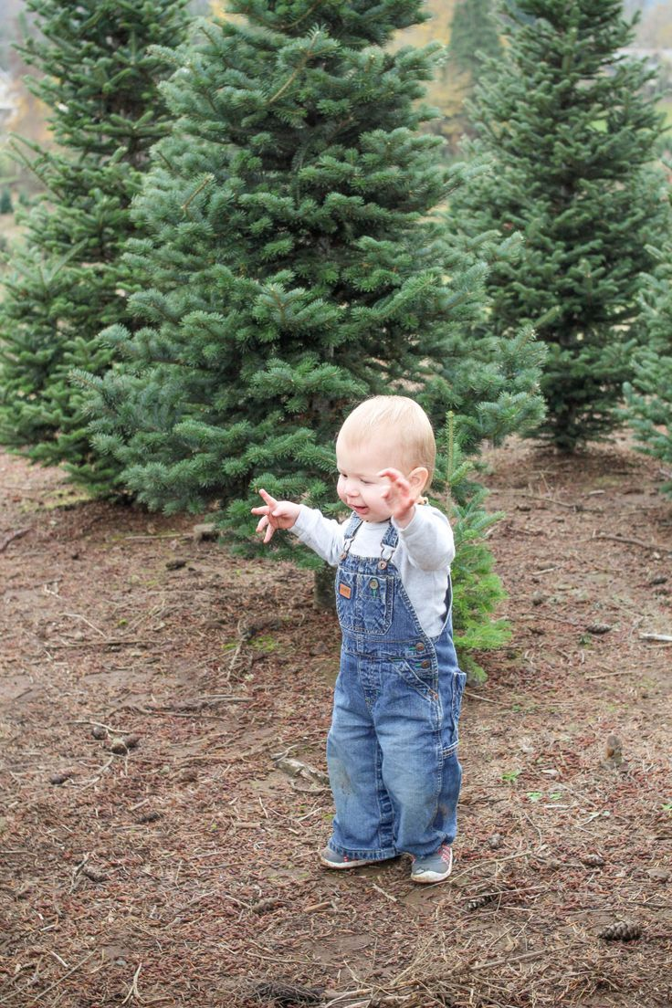 Best Christmas Tree Farms Cool Christmas Trees Christmas Tree Farm Tree Farms