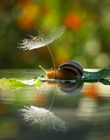 It's a snail...with an umbrella!