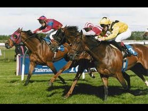 Horse Race Today   Horse Races   Horse Racing Schedule