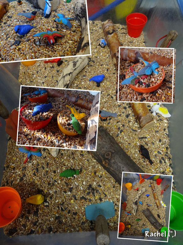 "Bird seed and birds... from Rachel ("",)"