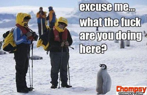 penguin what are you doing