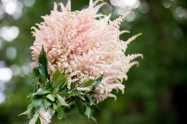 Astilbe bouquet   Photography by ameliabeamish.com