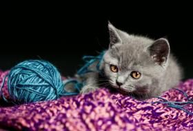 Stages of Kitten Development