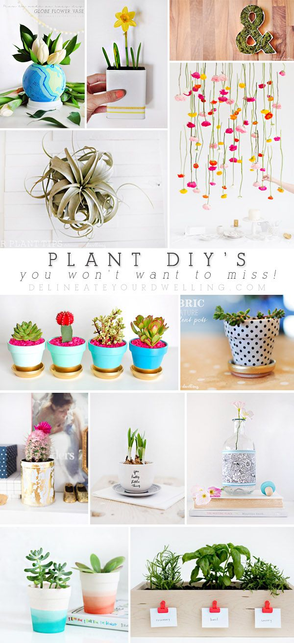 Easy and fun Plant DIYs you won't want to miss! - Delineate Your Dwelling