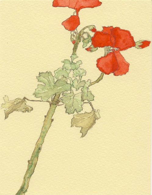geranium by embracetiger, via Flickr