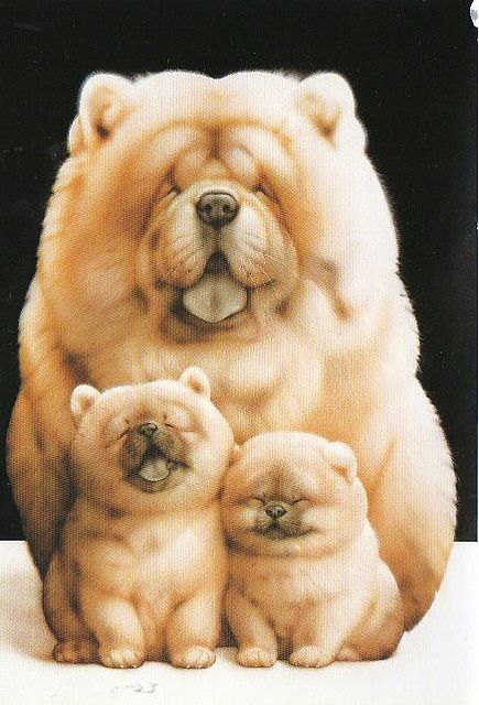 Chow Chow cushions to make any home, the perfect gift for any dog lover!  Cushion Co