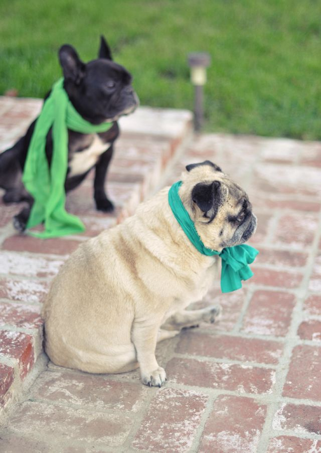 I will have a pug and french bulldog! Love em both!