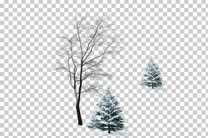 Winter Tree Cloak Infant Png Black And White Branch Cape Christmas Decoration Christmas Ornament Winter Trees Christmas Ornaments Christmas Decorations