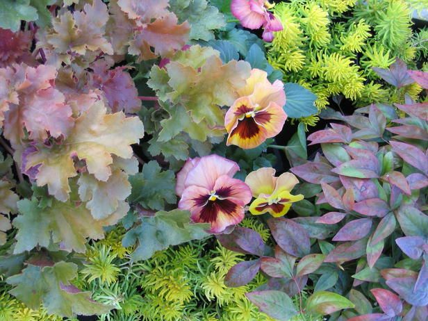 1159 best images about plant combinations on pinterest