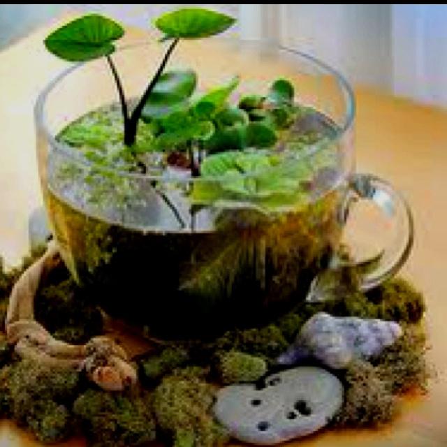 79 Best Water Plants Images On Pinterest Indoor 400 x 300