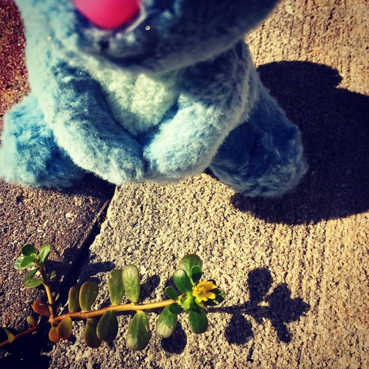 Daily Hoppiness: October 9, 2017, Noticing the Life Around You #dailyhappinessquotesforkids