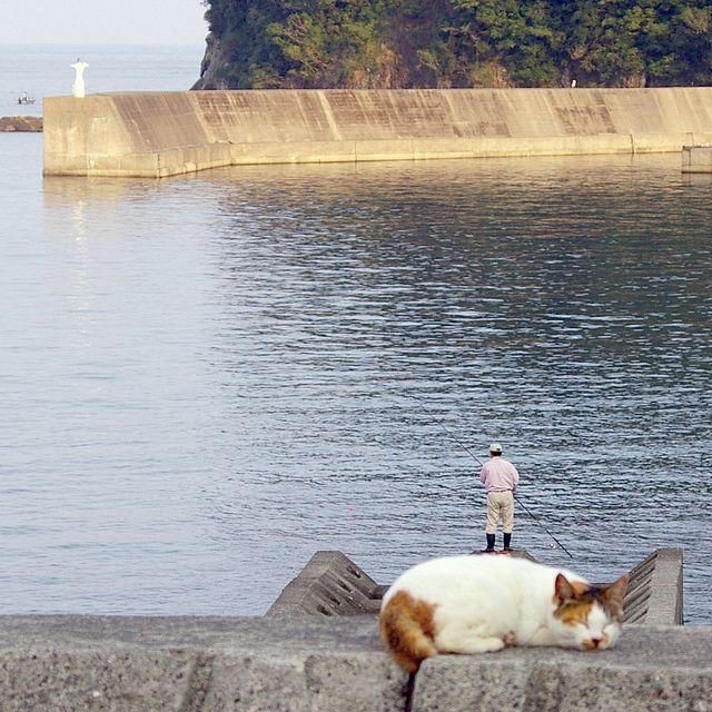 【画像】 猫の背中に乗って釣りをする小人の姿が激写された件