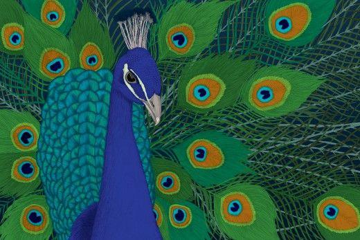 Peacock « Avant Card # 17250