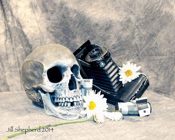 Skull with Camera Daisy Still Life Film Fine by JillShepherdPhotos