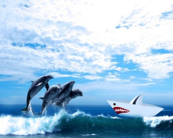 Perché  i delfini riescono  a sopravvivere  agli attacchi degli squali?