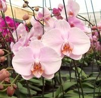 94 Best Images About Orchid Flowers On Pinterest Root