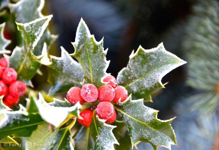 Wohin uns die Reise der Rauhnächte führt... der 22. Dezember und die Tage vor Weihnachten