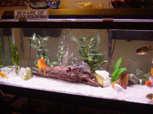 how to make a goldfish tank