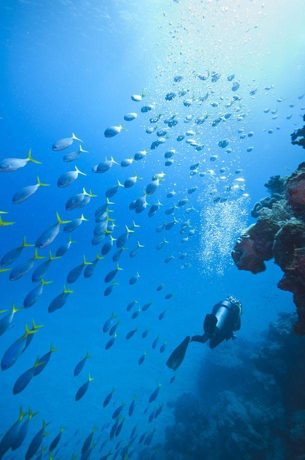 Scuba Diving the Great Barrier Reef, Australia