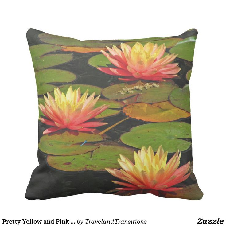 Pretty Yellow and Pink Waterlilies
