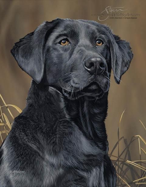 Dog Paintings Sporting Dog Paintings by Scot Storm - Sporting Dog ...