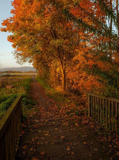 leavesandpumpkins:  Want more autumn beauty on your dash? Followleavesandpumpkins