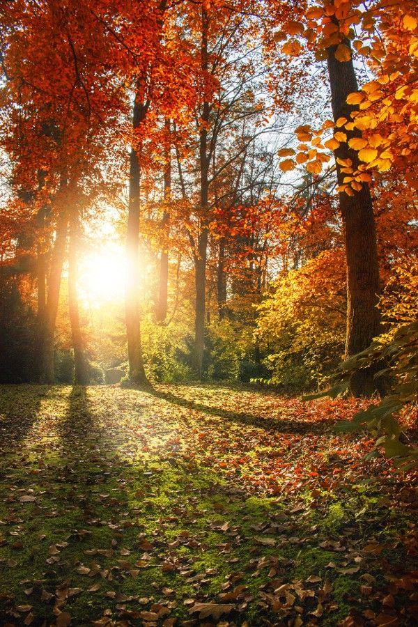 """radivs: """"Autumn Forest by Michelle Schneider """""""