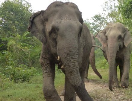 #Lilly was beaten by her owner and forced to beg on the streets. Rescued in October 2014 with the help of Forest Department and the #WildlifeSOS team to the #ElephantRehabilitationCenter in Haryana. Her primary medical concerns included several neck wounds from the ropes and chains used to control her. After just a month with us, Lilly settled very well into her new home.  She is always pampered by the Wildlife SOS keepers with lots of fruits and yummy healthy food. Feed her for a day by…